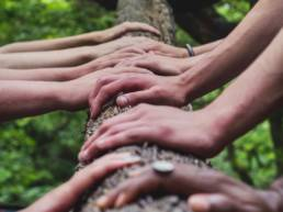 Many hands touching a tree for a Team-building activity